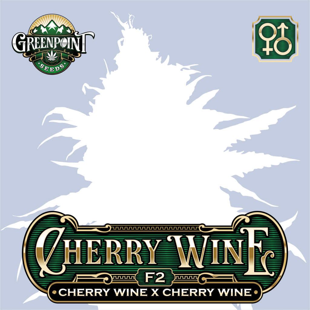 Cherry Wine BX Cannabis Seeds - Greenpoint Seeds