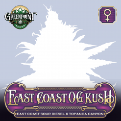 East Coast OG Kush Feminized Cannabis Seeds - ECSD x Topanga Canyon Strain - Greenpoint Seeds