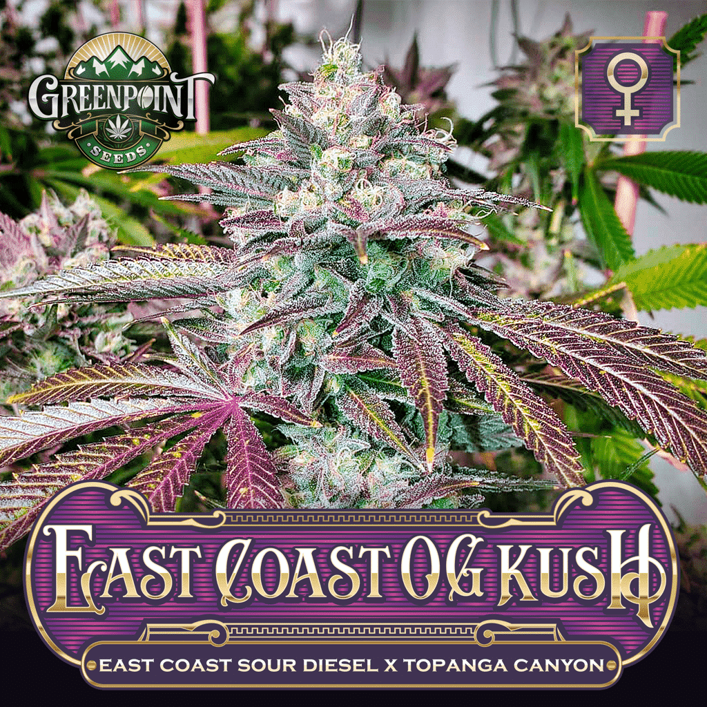 East Coast OG Kush Feminized Cannabis Seeds - ECSD x Topanga Canyon Strain - Greenpoint Seeds