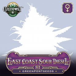 East Coast Sour Diesel S1 x ECSD - Feminized Cannabis Seeds - Greenpoint Seeds