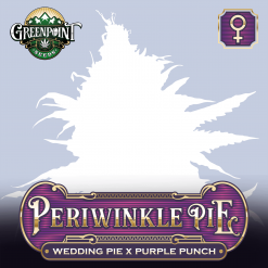 Wedding Pie x Purple Punch - Periwinkle Pie - Feminized Cannabis Seeds