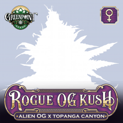 Rogue OG Kush Feminized Cannabis Seeds - Alien OG x Topanga Canyon Strain - Greenpoint Seeds