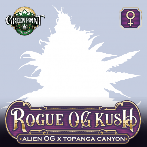 Rogue OG Kush Feminized Cannabis Seeds - Alien OG x Topanga Canyon Strain - Greenpoint Seeds