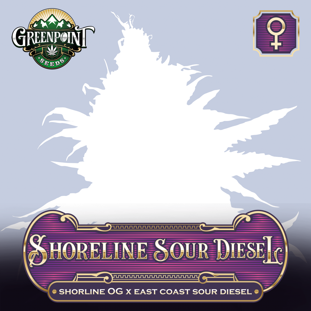 Shoreline OG x ECSD Feminized Seeds - Shoreline Sour Diesel Cannabis Seeds - Greenpoint Seeds