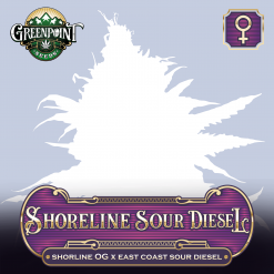 Shoreline OG x ECSD Feminized Seeds - Shoreline Sour Diesel Cannabis Seeds - Greenpoint Seeds
