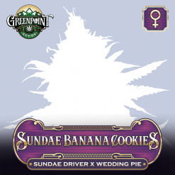 Sundae Banana Cookies - Sundae Driver x Wedding Pie Feminized Cannabis Seeds - Buy Feminized Seeds Online at Greenpoint Seeds