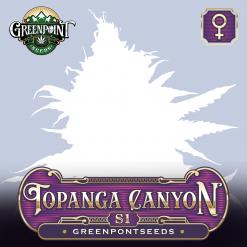 Topanga Canyon S1 Feminized Cannabis Seeds - Greenpoint Seeds Colorado