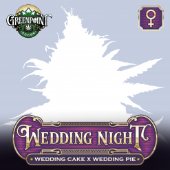 Wedding Cake x Wedding Pie Feminized Cannabis Seeds - Wedding Night - Buy Feminized Seeds Online