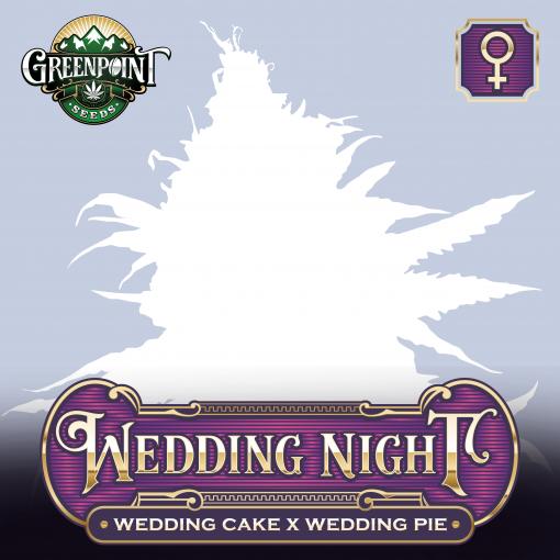 Wedding Cake x Wedding Pie Feminized Cannabis Seeds - Wedding Night - Buy Feminized Seeds Online