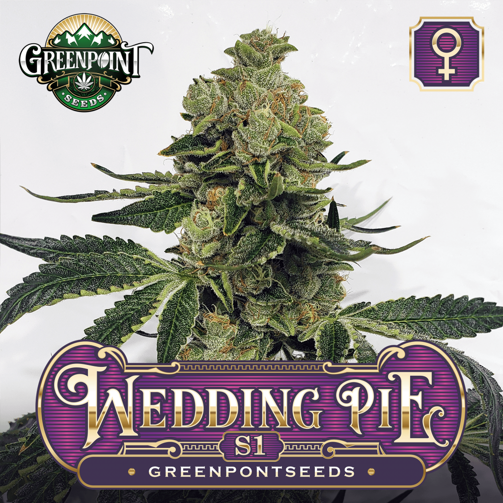 Wedding Pie S1 Female Cannabis Seeds