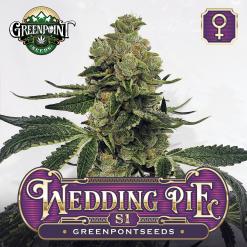Wedding Pie S1 Female Cannabis Seeds