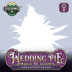 Wedding Pie S1 Feminized Cannabis Seeds - Greenpoint Seeds