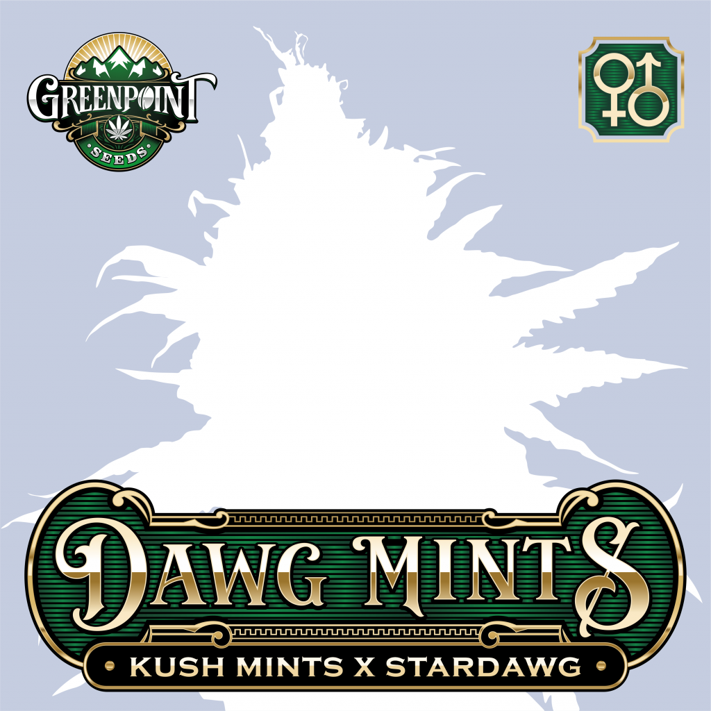 Kush Mints x Stardawg Cannabis Seeds - Dawg Mints Strain - Greenpoint Seeds