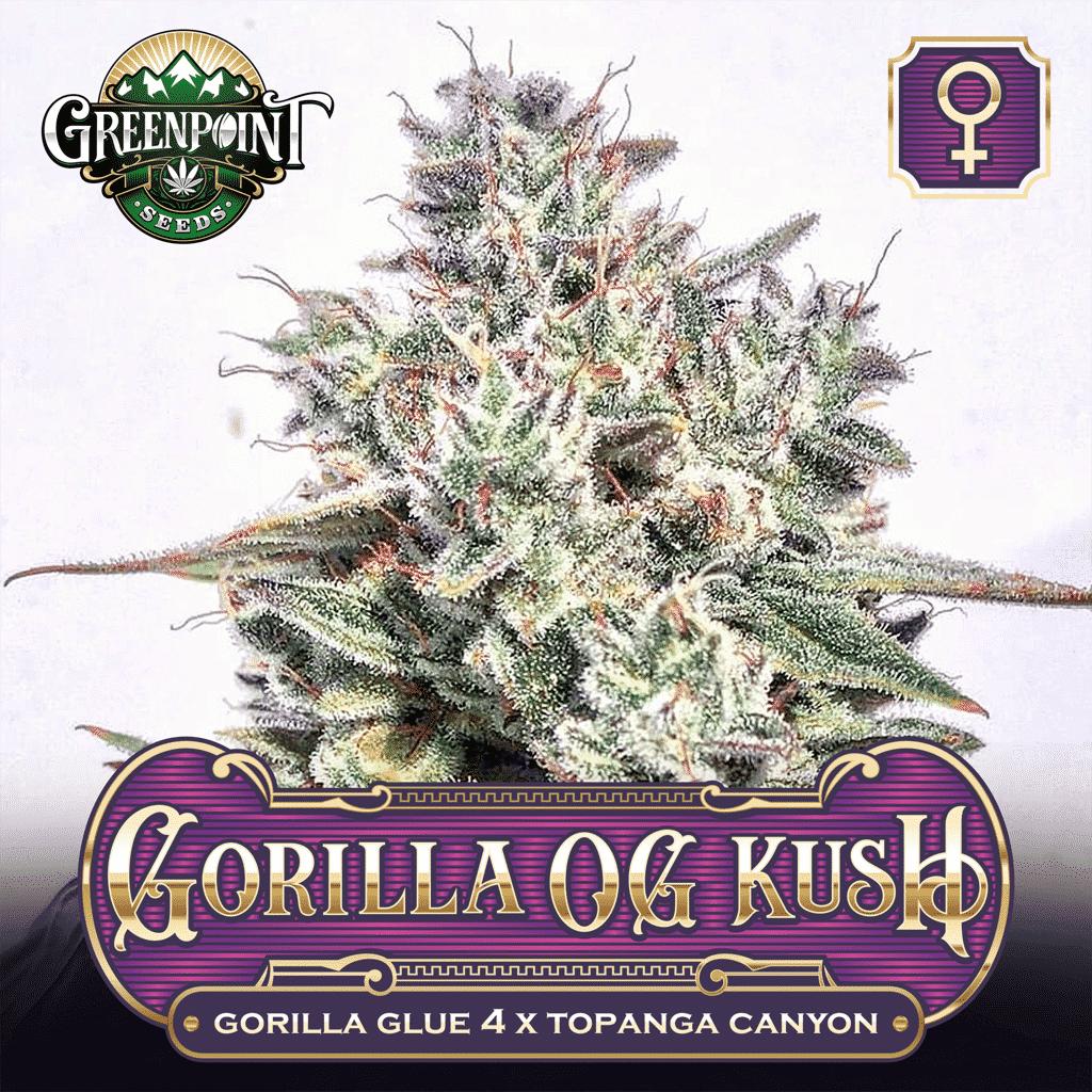 GG4 x Topanga Canyon OG Kush - Gorilla OG Kush - Feminized Cannabis Seeds