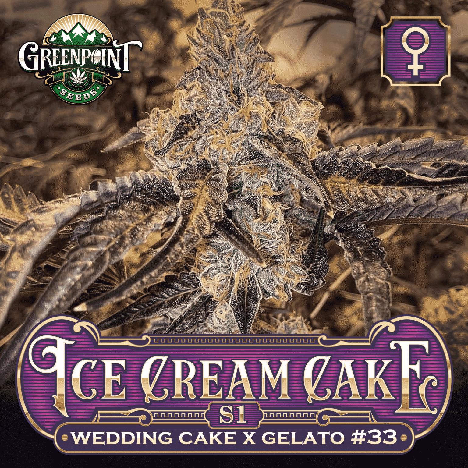 Ice Cream Cake S1 Feminized Cannabis Seeds - Greenpoint Seeds