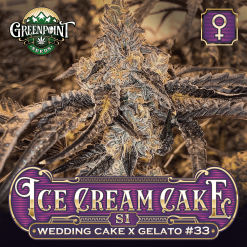 Ice Cream Cake S1 Feminized Cannabis Seeds - Greenpoint Seeds