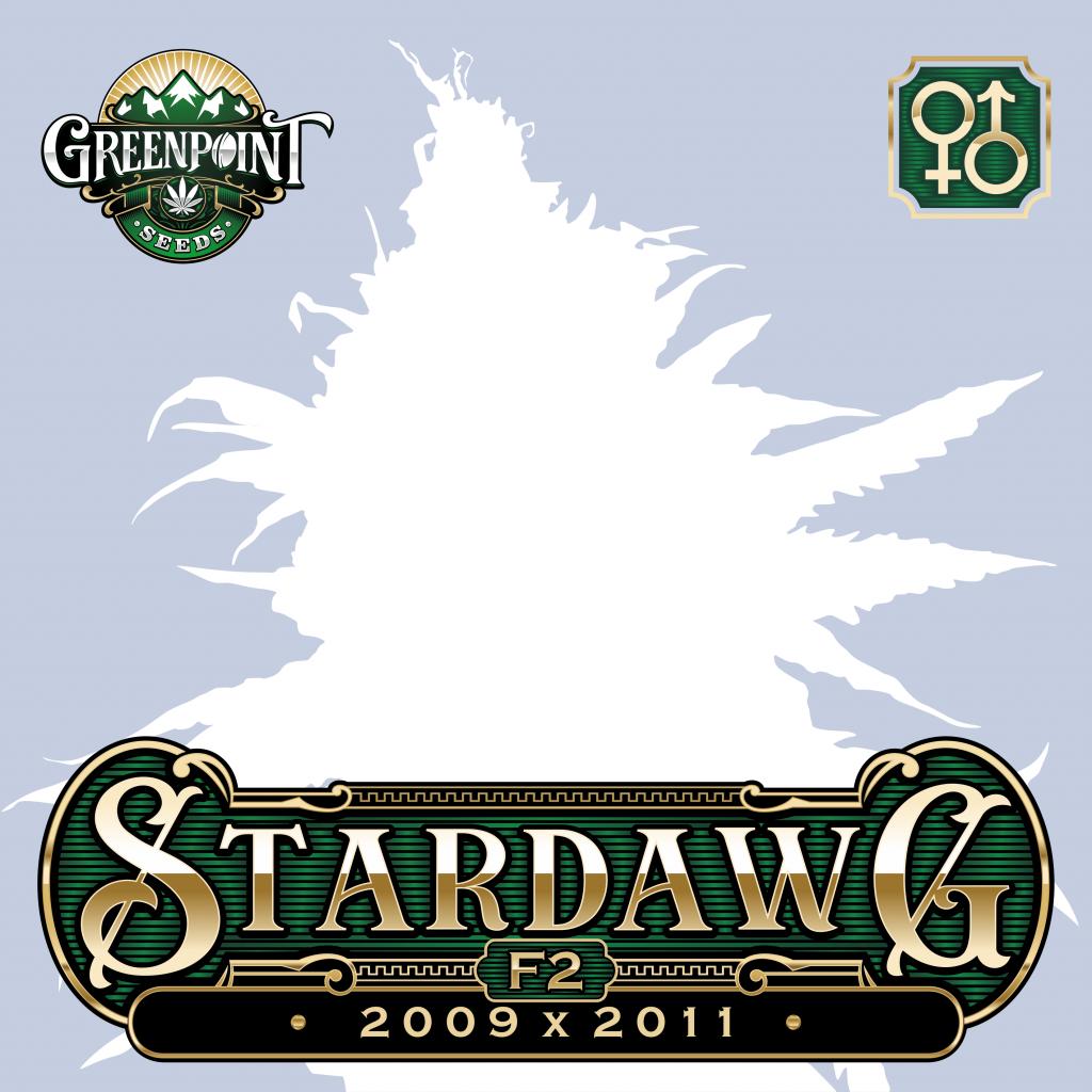 Stardawg 2009 x Stardawg 2011 Cannabis Seeds - Stardawg F2 Marijuana Strain - Greenpoint Seeds