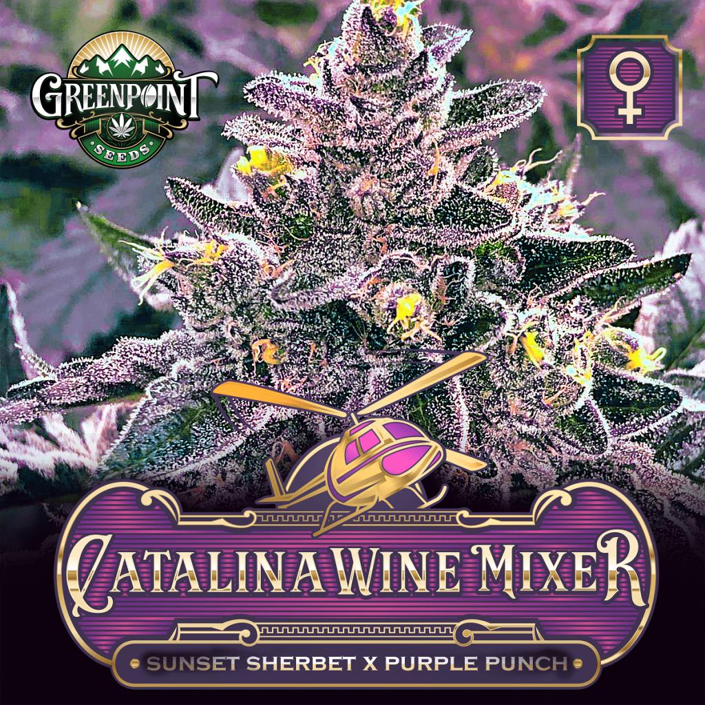 Catalina Wine Mixer Feminized Cannabis Seeds