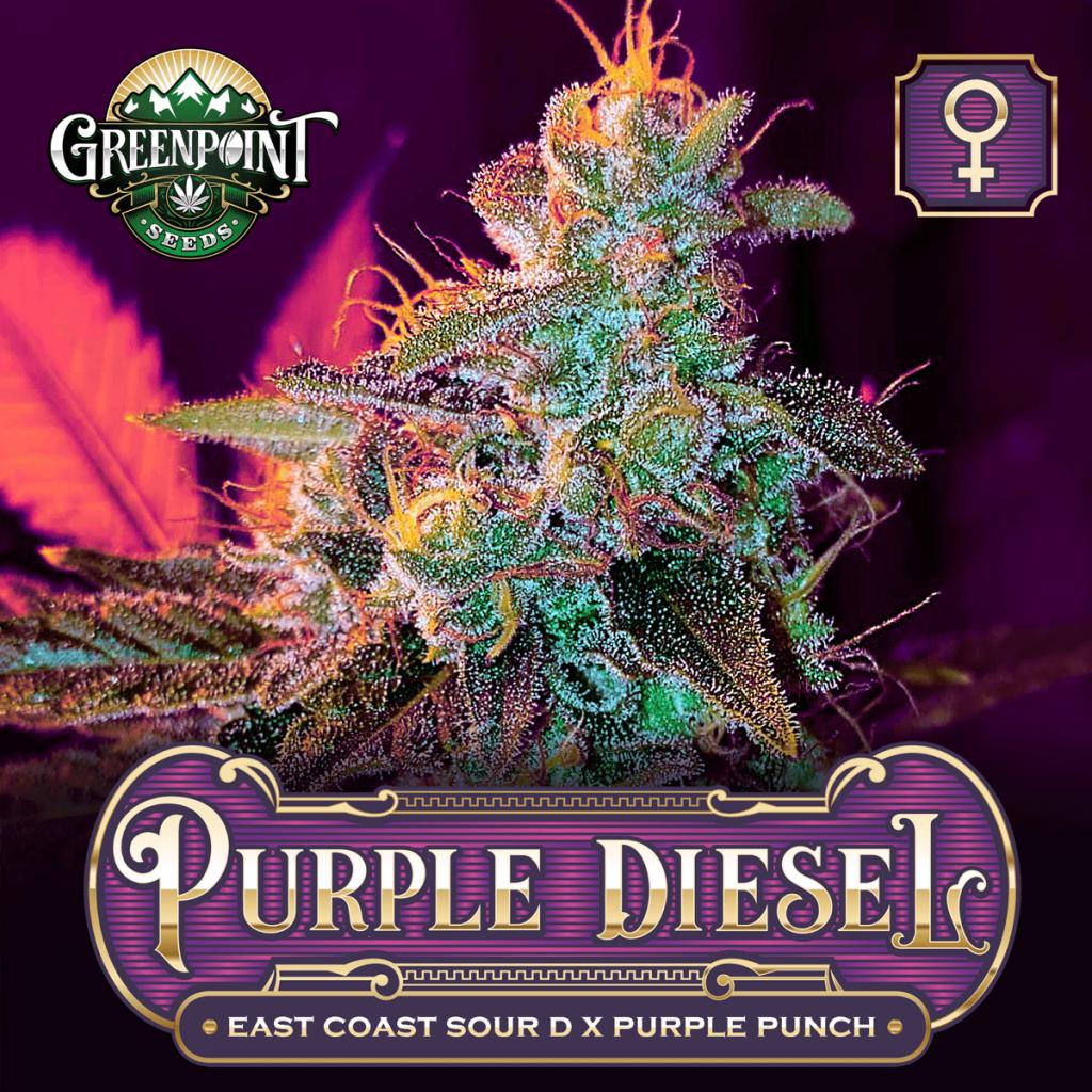 Purple Diesel Feminized Cannabis Seeds - East Coast Sour Diesel x Purple Punch