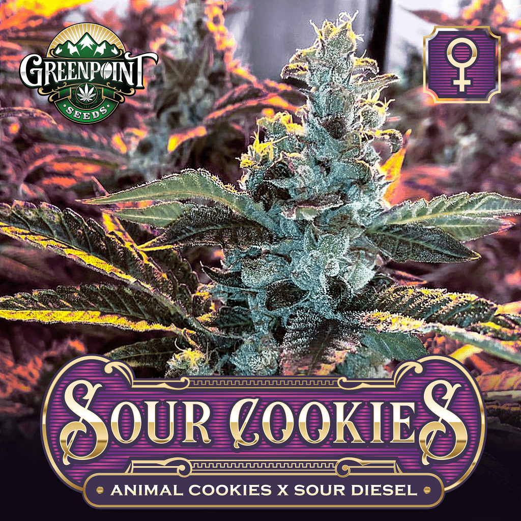 Animal Cookies x Sour Diesel Feminized Cannabis Seeds - Sour Cookies Marijuana Strain