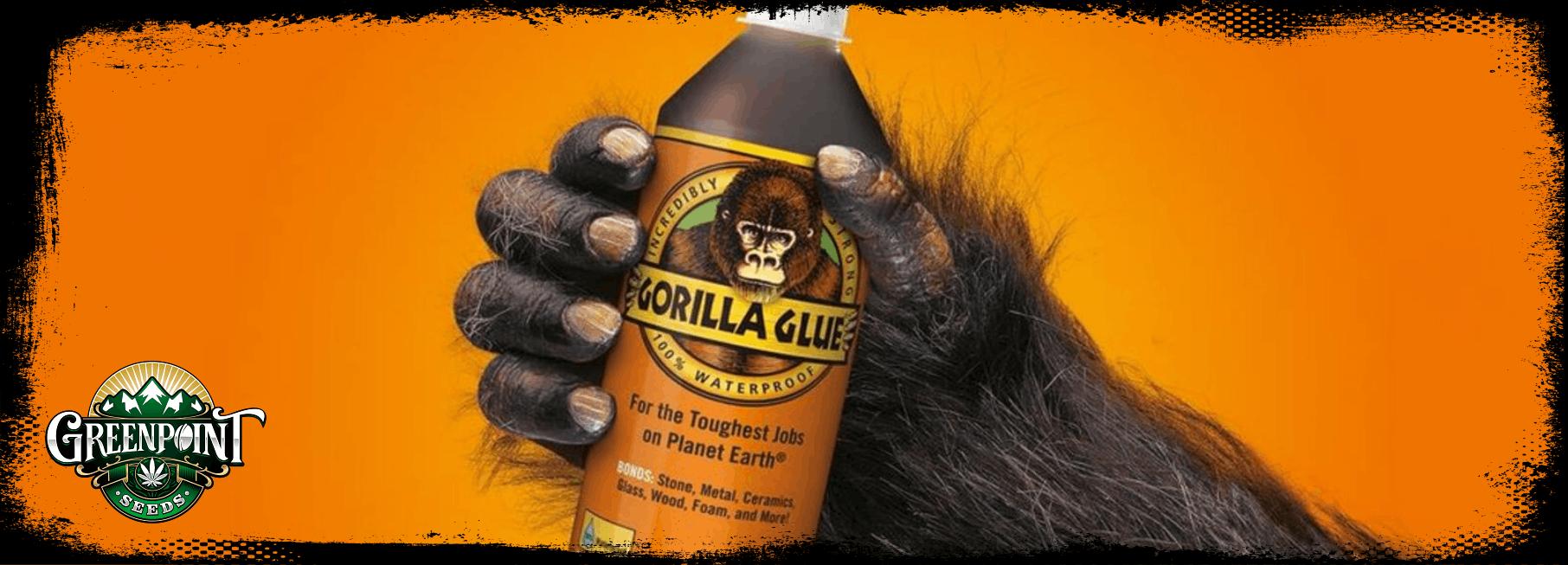 Gorilla Glue #4 - Greenpoint Seeds
