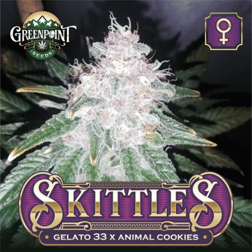 Skittles Feminized Cannabis Seeds - Gelato 33 x Animal Cookies | Greenpoint Seeds
