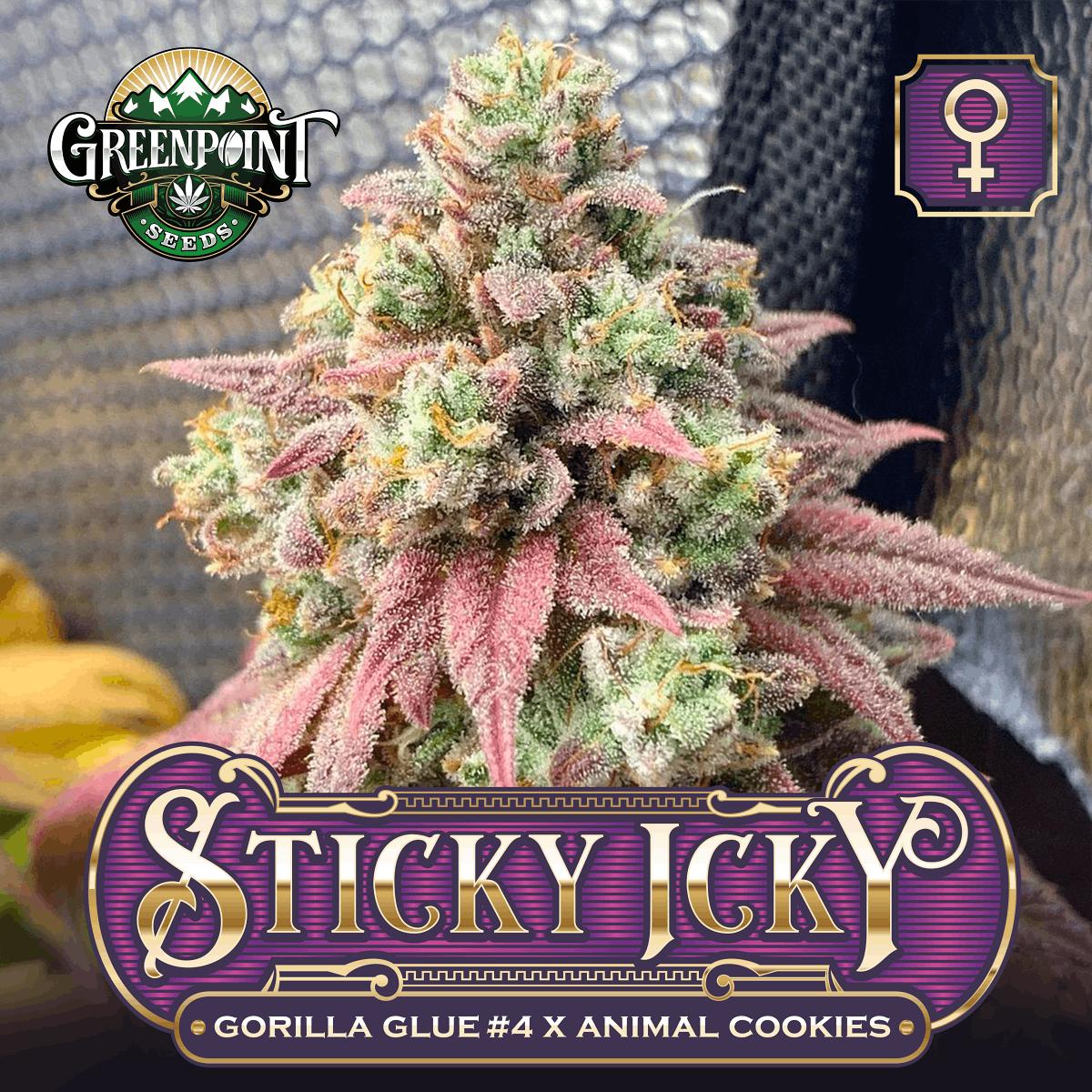 Sticky Icky Cannabis Seeds - Gorilla Glue x Animal Cookies | Greenpoint Seeds