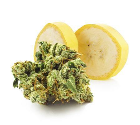 Bananimal Cannabis Seeds