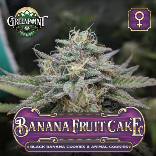 Banana Fruit Cake Feminized Cannabis Seeds