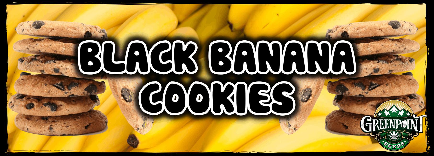 Black Banana Cookies Cannabis Strain