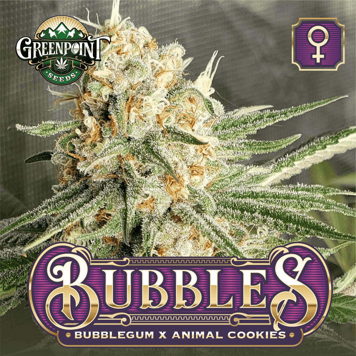 Bubbles Feminized Cannabis Seeds