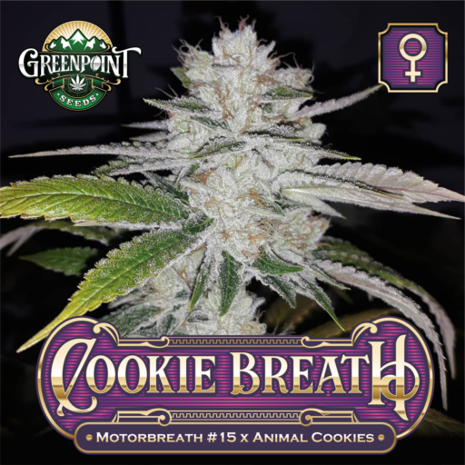 Cookie Breath Feminized Cannabis Seeds