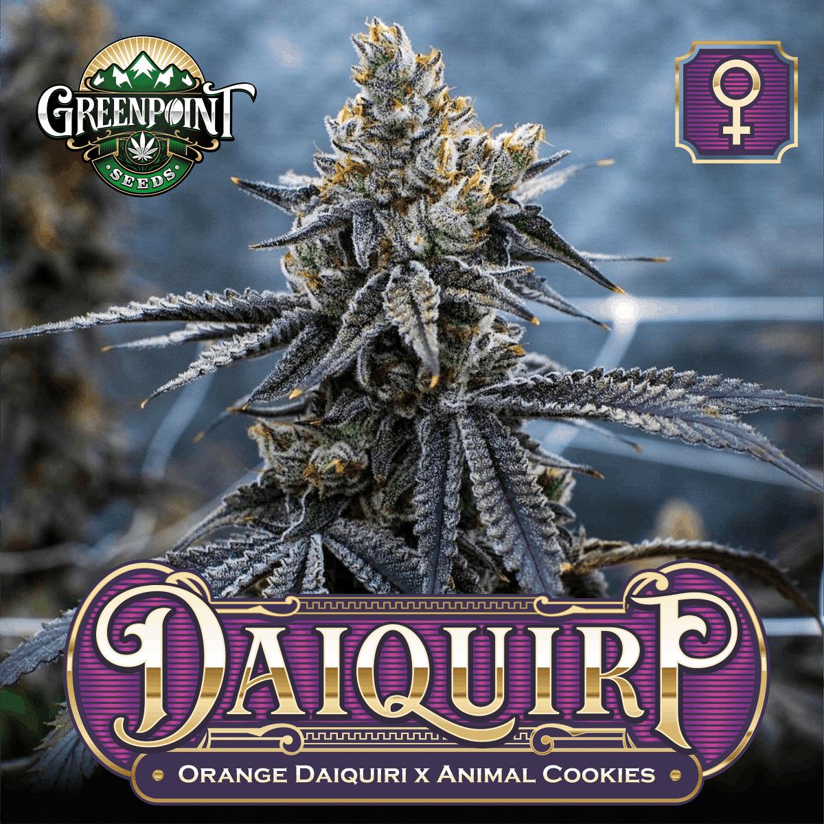 Daiquiri Feminized Cannabis Seeds