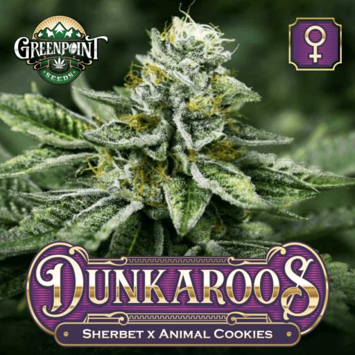 Dunkaroos Feminized Cannabis Seeds