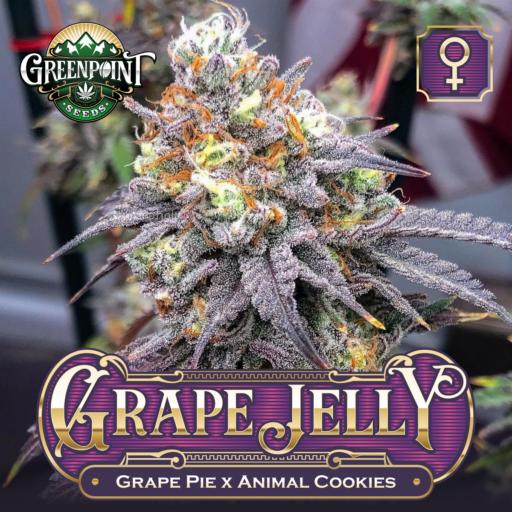 Grape Pie Feminized Cannabis Seeds