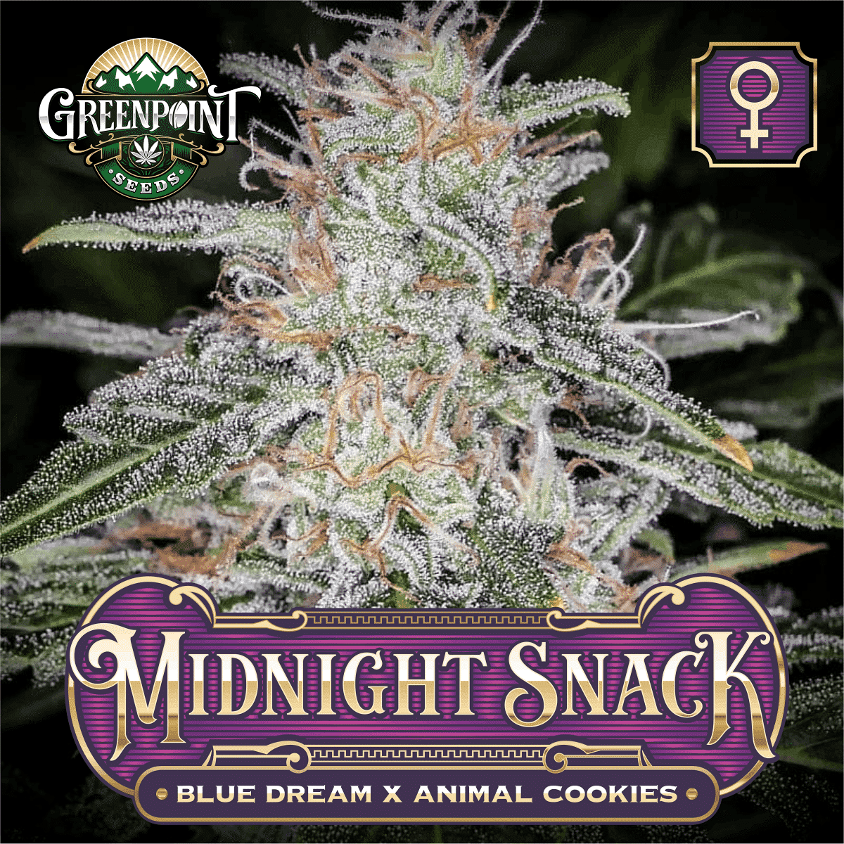 Midnight Snack Feminized Cannabis Seeds