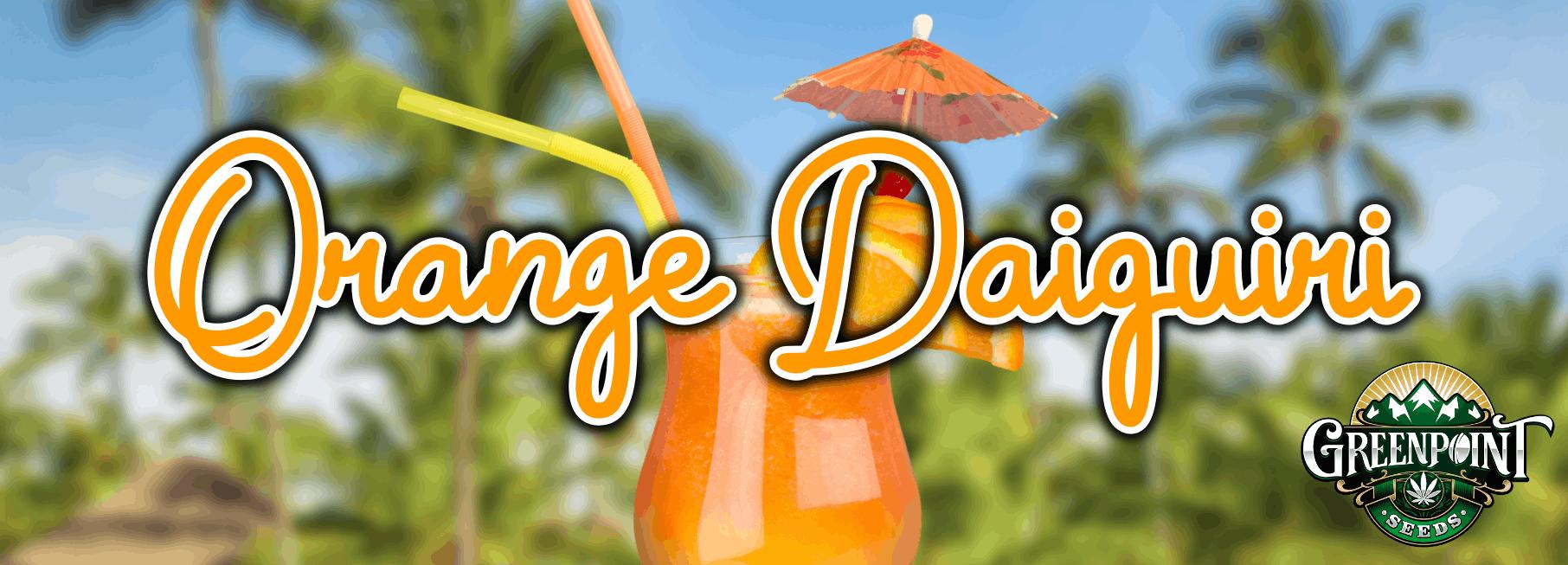 Orange Daiquiri Feminized Seeds