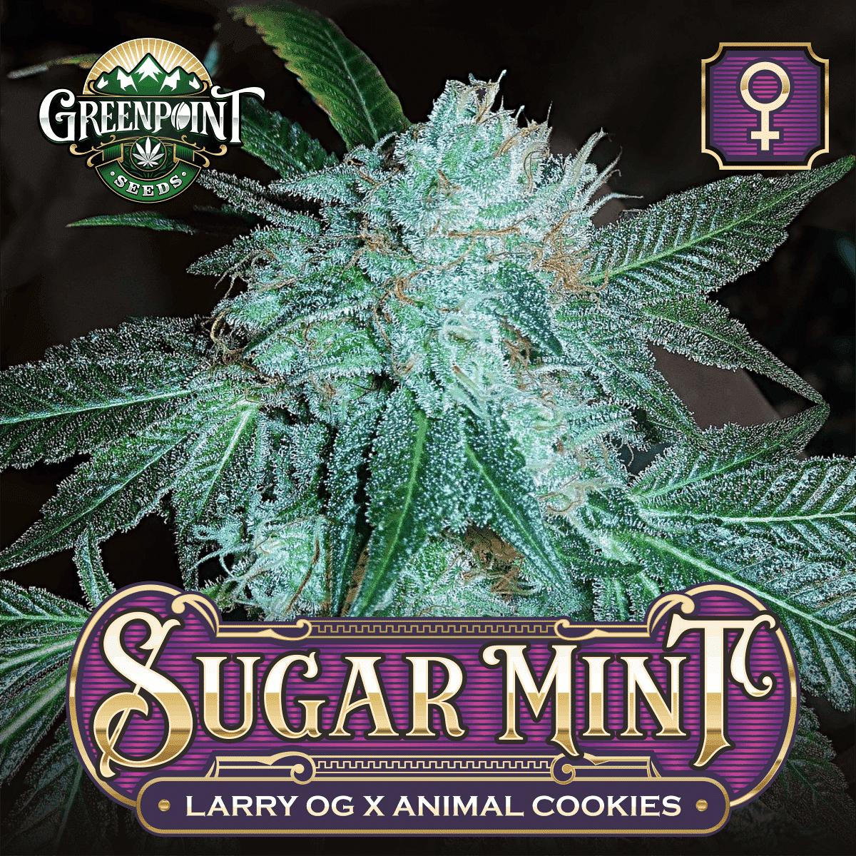 Sugar Mint Feminized Cannabis Seeds