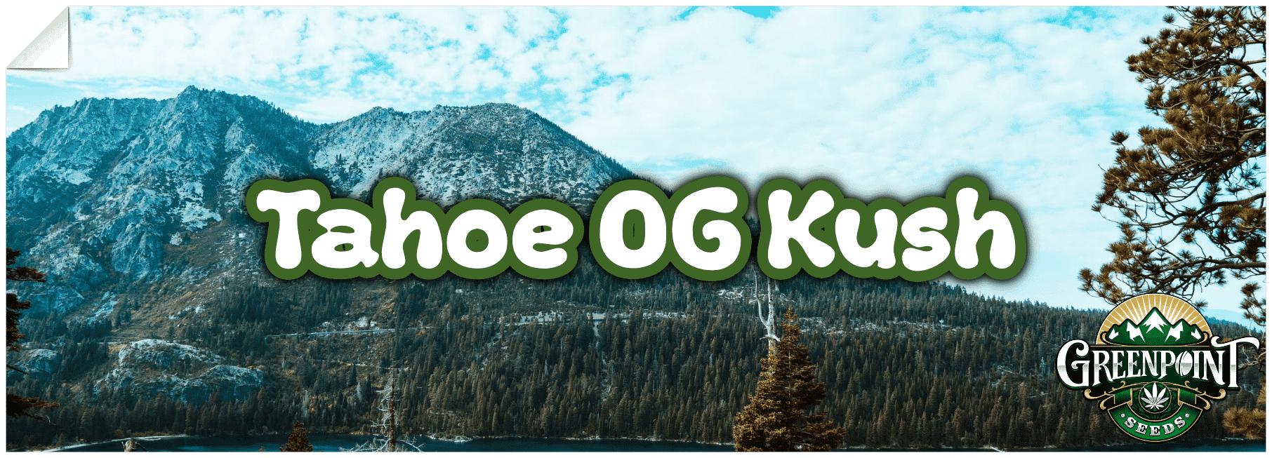 Tahoe OG Kush Strain