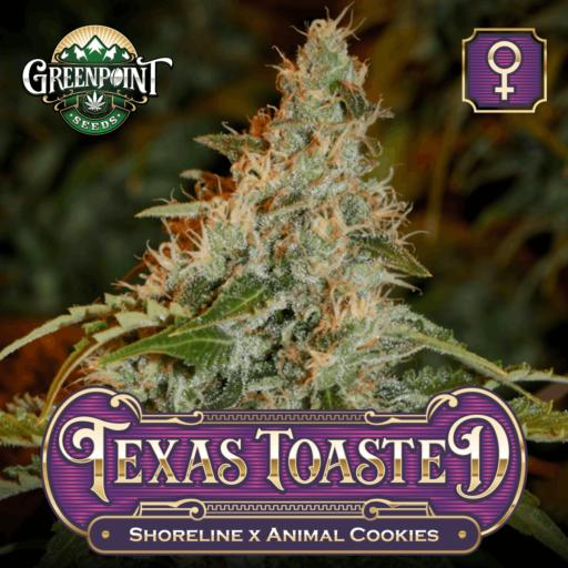 Texas Toasted Feminized Cannabis Seeds
