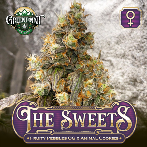 The Sweets Feminized Cannabis Seeds