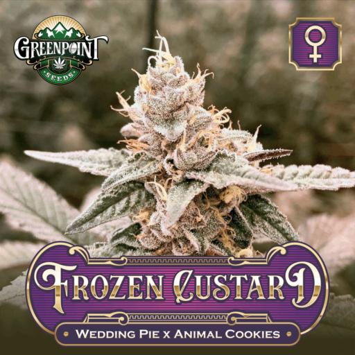 Frozen Custard Feminized Cannabis Seeds - Wedding Pie x Animal Cookies - Greenpoint Seeds