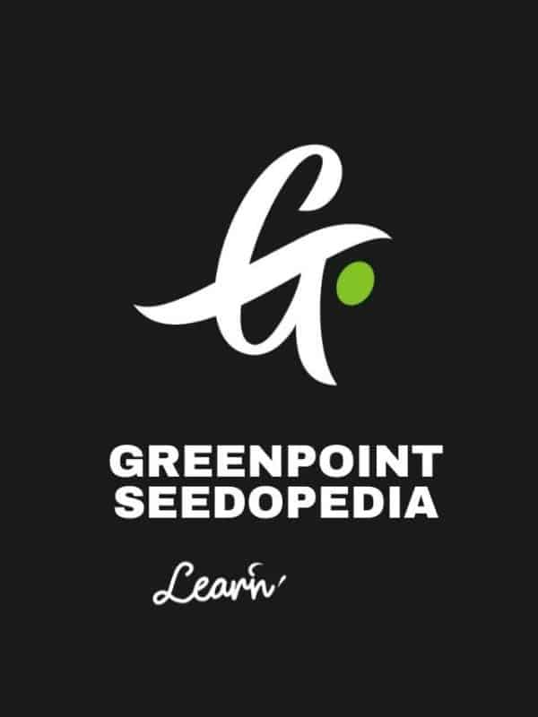 Cover Greenpoint Web Story